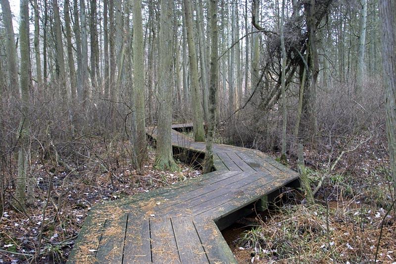 Cheesequake State Park – Blue Trail   njHiking com