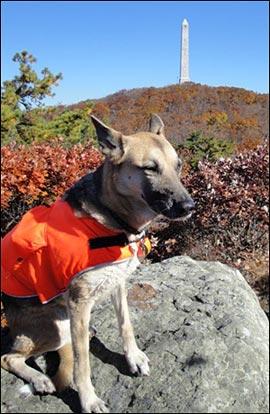 Blaze Orange Dog Vest