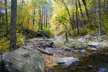 Fall Foliage Coverage Maps Reports And Resources From Around The United States