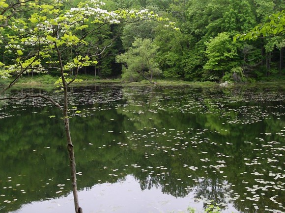 Ghost Lake surrounded by green trees