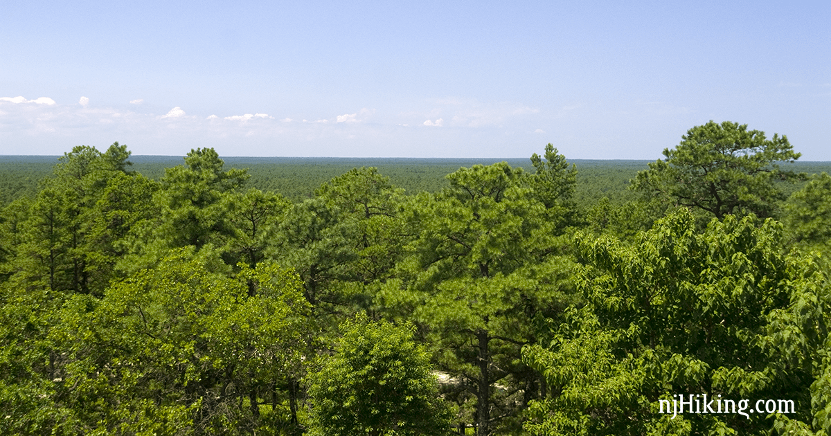Apple Pie Hill – Wharton State Forest | njHiking com
