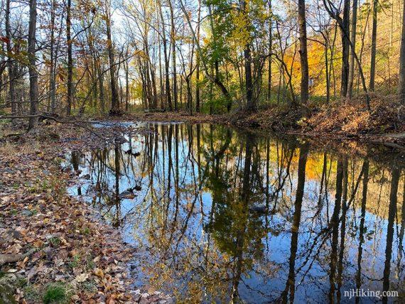 Green Brook at Watchung Reservation