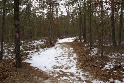 Batsto Lake Trail