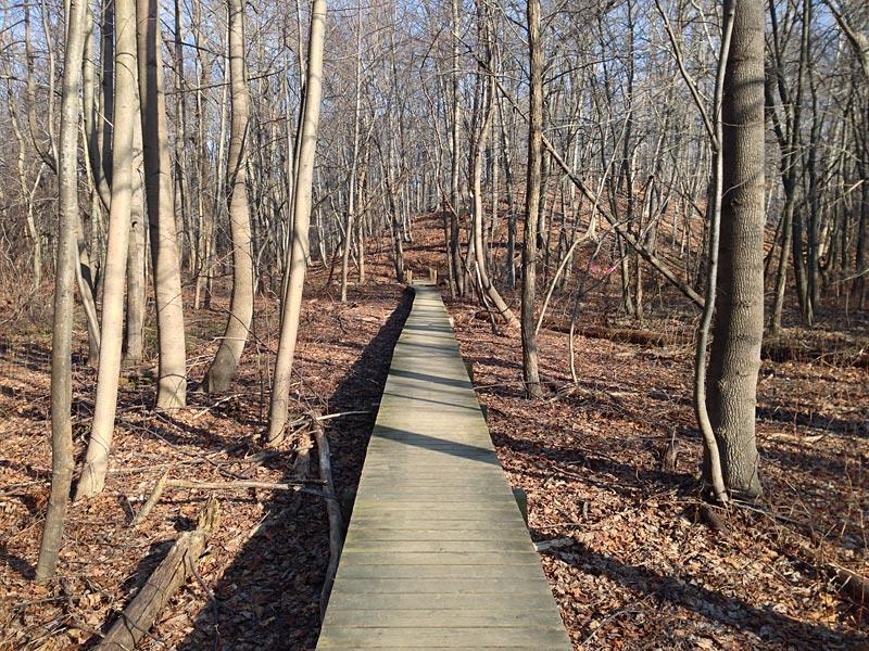 cheesequake-green-trail