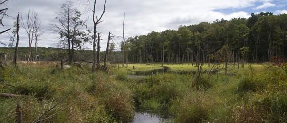Wawayanda State Park