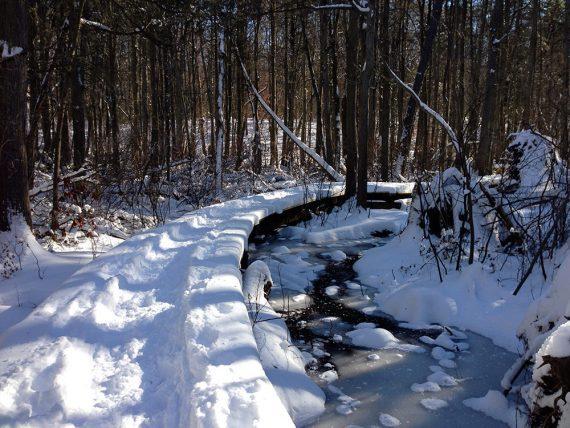 Curved boardwalk through a frozen cedar swamp