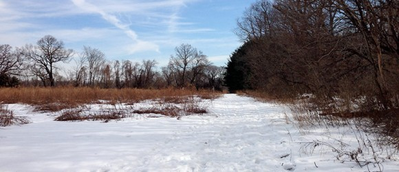 Helyar Woods in the Snow