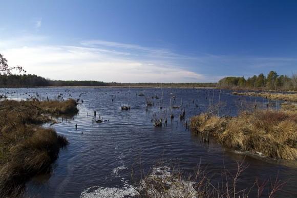 Pakim Pond Cranbury Bog