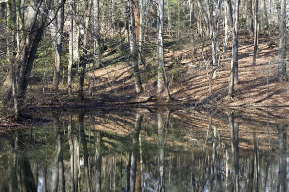 Woods of Wenonah