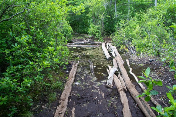 Wet and muddy trail crossing on logs