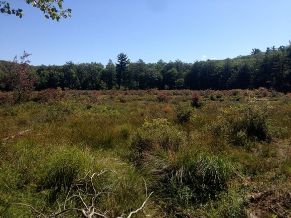 Harriman - Pine Swamp