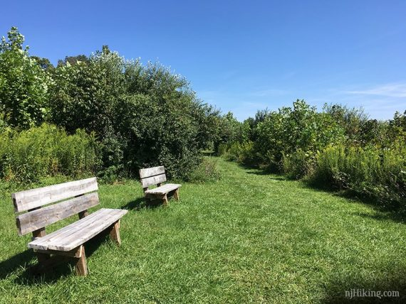 Grassy trail and benches