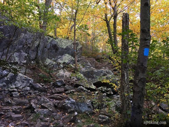 Trail with many small rocks and a blue marker on a tree