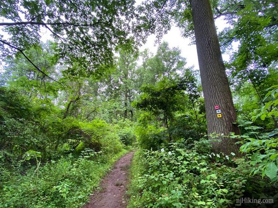 NW Loop trail