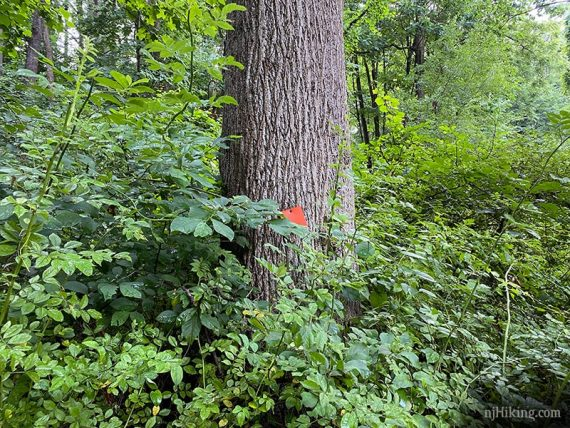 Orange trail marker on a tree surrounded by brush