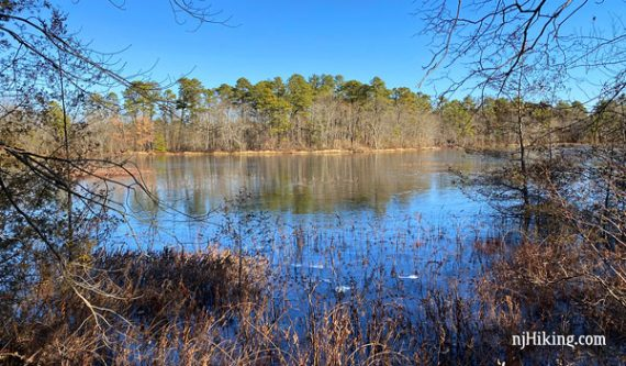 Black Run Preserve wetland surrounded by pine forest