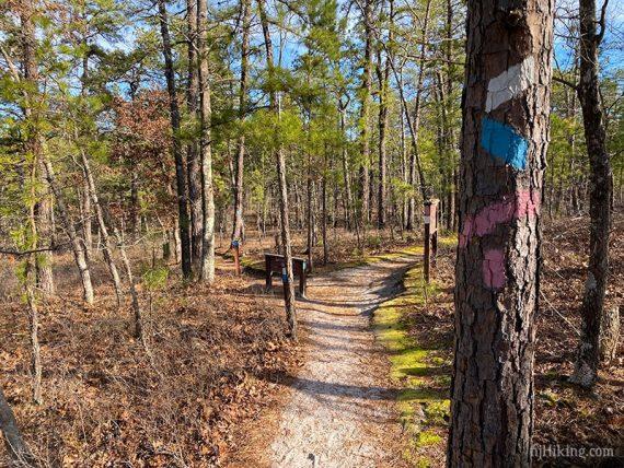 Batsto blue trail