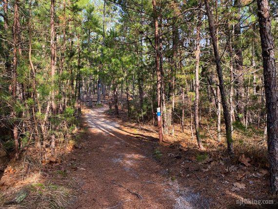 Batsto white trail