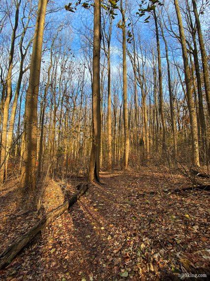Tatum trees