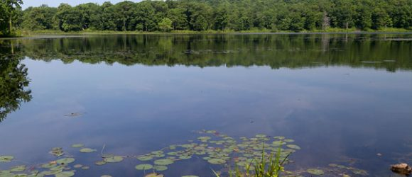 Allamuchy Mountain - Deer Park Pond