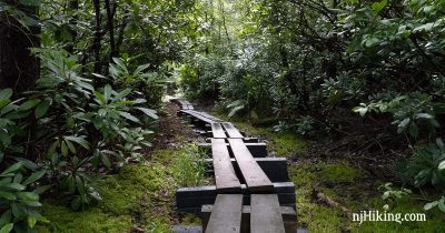 Long plank boardwalk with rhododendron on either side