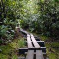 Wawayanda State Park - Cedar Swamp