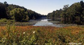 Davidsons Mill Pond