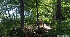 Farrington Lake Trail