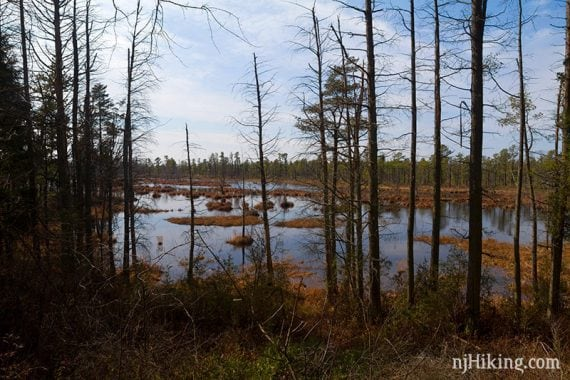 The Mullica River seen through stands of tall pine trees