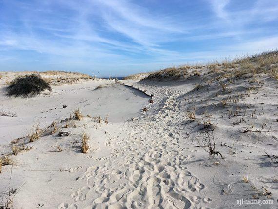 Island Beach - Reed's Trail