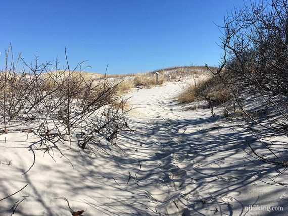Island Beach - Cranberry Trail