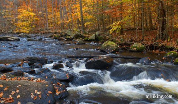 Stream rushing over rocks surrounded by fall foliage