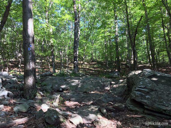 Blue blazes on a rocky trail