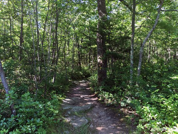 Trail with forest around it
