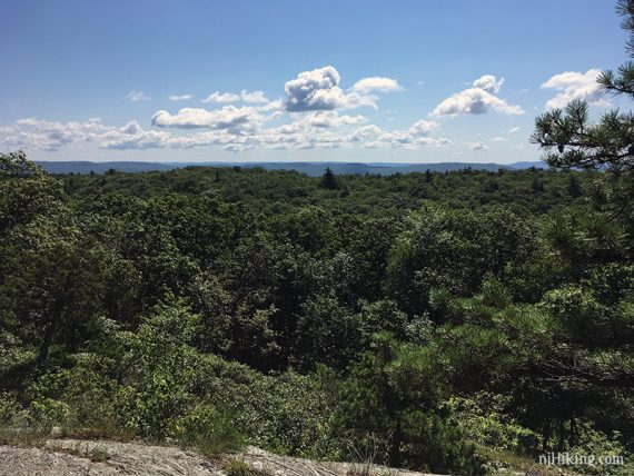 Wide panorma over a forest