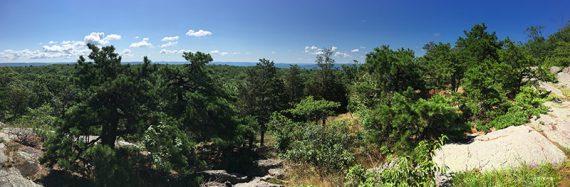 Trees seen from a rocky ridge