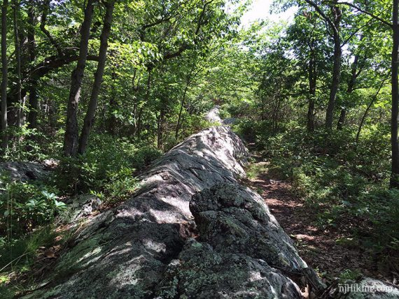 Long pointed slab of rock on a trail