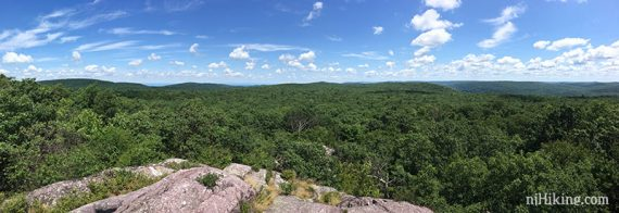 Wide panoramic view of green trees