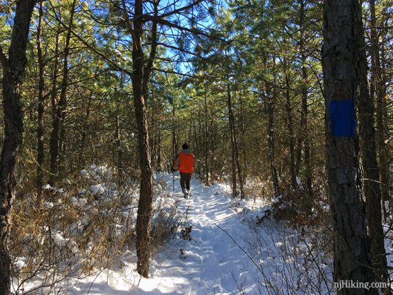 Snowshoer on snowy trail surrounded by pine trees