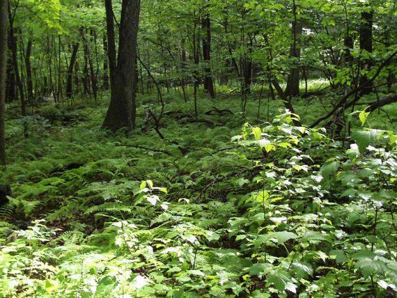 Lush foliage along trail