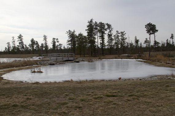Pond near the visitor center