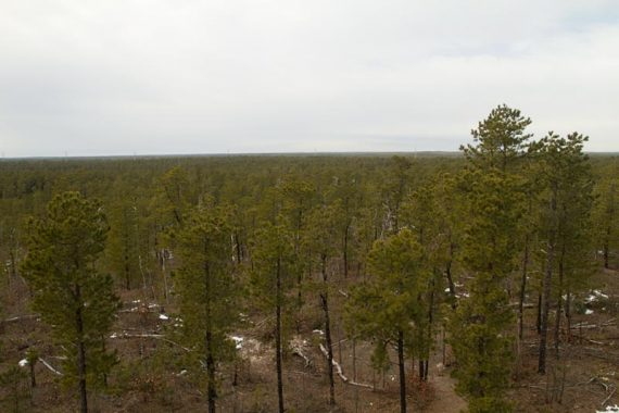 View of the Pine Barrens from the Observation Center