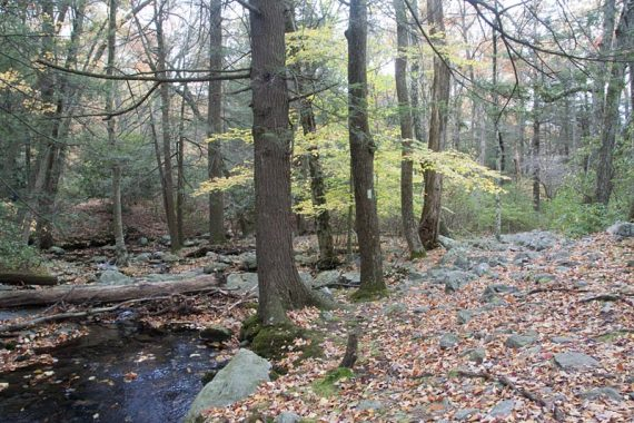 Dunnfield Creek Trail