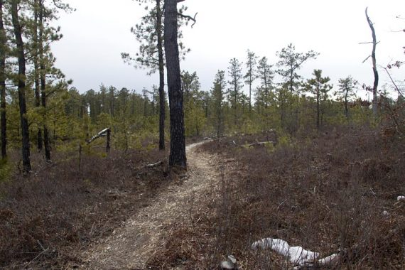 Trail through fire damaged trees.