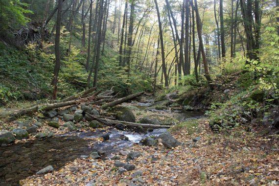 Dunfield Creek along Appalachian Trail