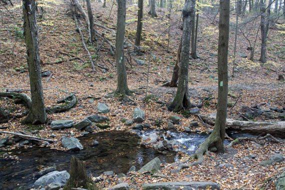 Return via Dunnfield Creek trail