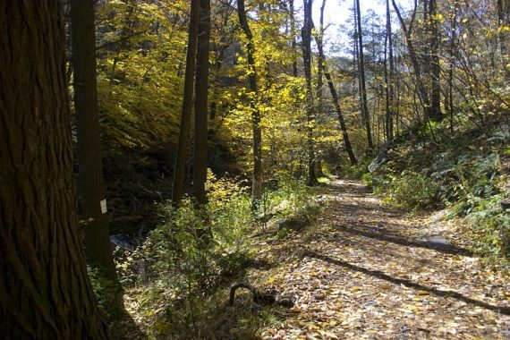 Appalachian Trail next to Dunnfield Creek