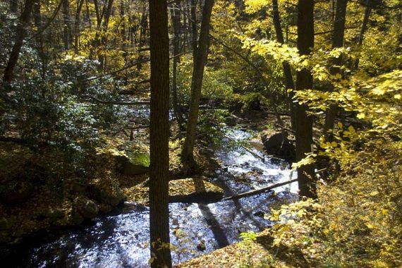 Dunnfield Creek