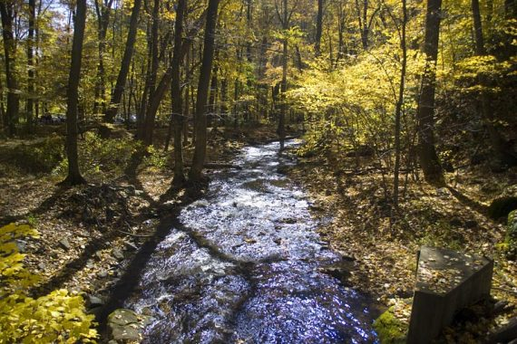 Creek surrounded by yellow fall foliage