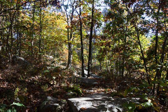 Rocky Appalachian Trail surrounded by fall foliage